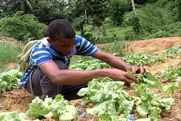Luring Youth Towards Agriculture