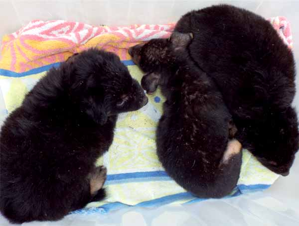 Three pups rescued at the weekend