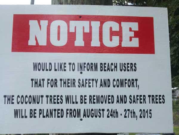 Laborie-Beach-Coconut-Trees