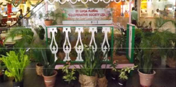 Plants on display in a colonial verandah