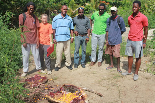 img: The carcass of the slaughtered turtle. [Photo: Saint Lucia National Trust]