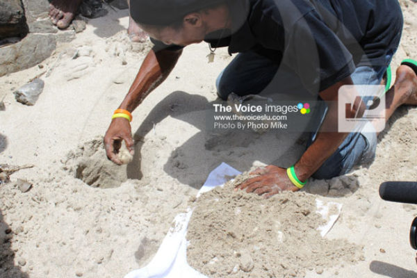 img: The relocation of turtle eggs is a delicate and scientific exercise. The group came upon several turtle eggs that needed to be relocated because the nest they were in was struck by erosion from high tides.