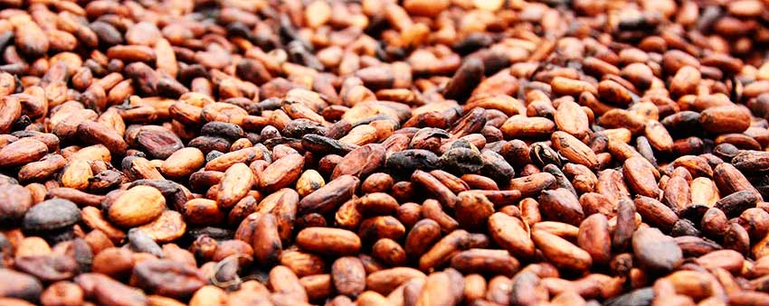 Image of cocoa beans