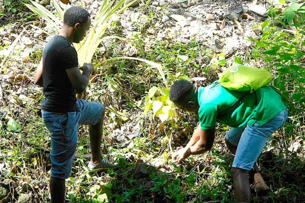 Image: Members of the 'Atlas' group planting trees to protect the Choiseul riverbed
