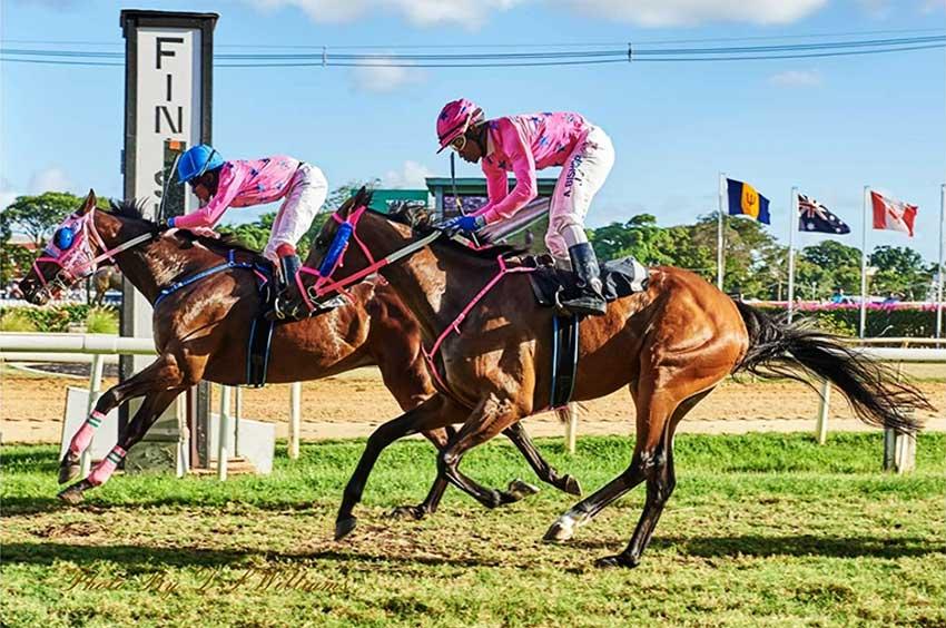 Image: Eric Daniel hits the winning pole on Arrowhead at the Garrison Savannah, Barbados.
