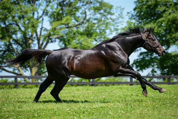 Image of Winstar Farm's Pioneer of the Nile
