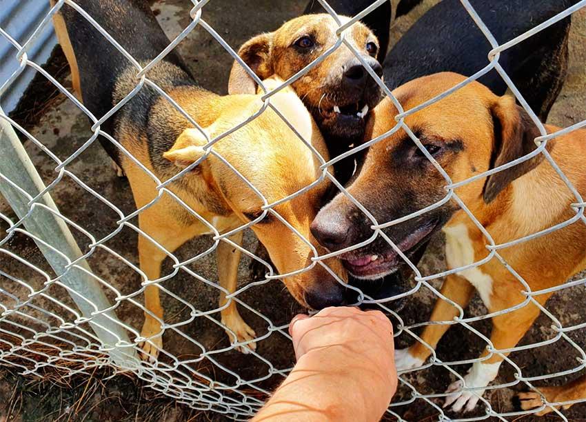 Image: Animals need love too.