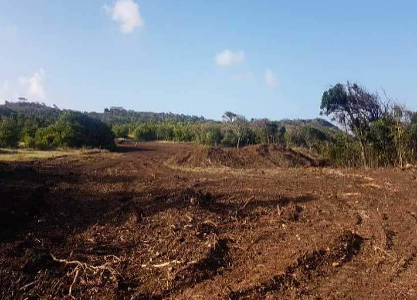 Image: Massive ongoing land clearance 2020. Source: Authors